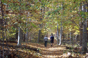 Hikers on Tree Lined Path at Scott's Run Nature Preserve
