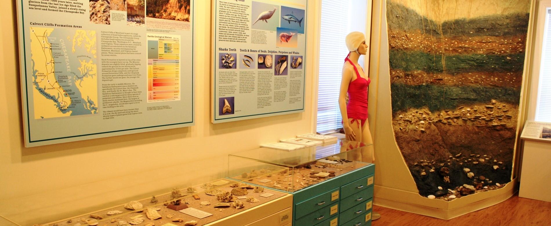 Paleontology exhibit at the Bayside History Museum.
