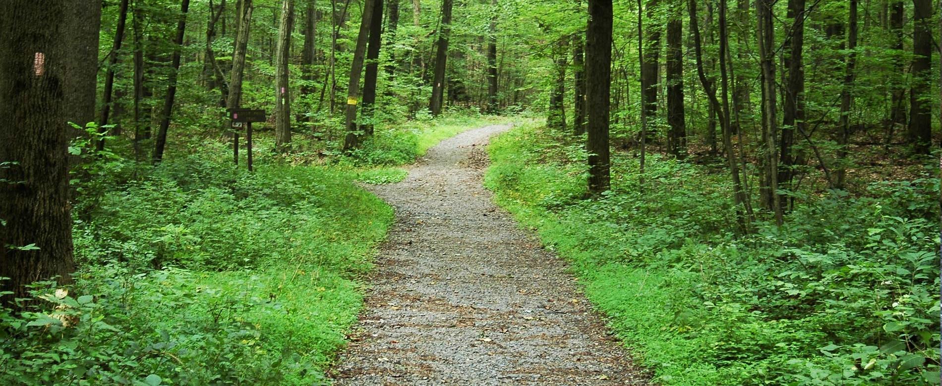 Boyd Big Tree Preserve Conservation Area