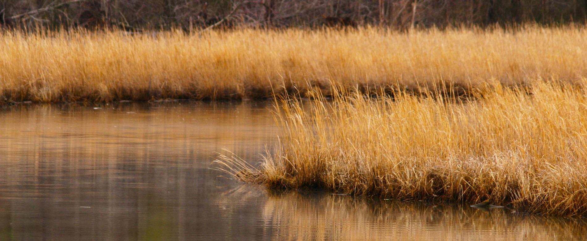 Parkers Creek Watershed Nature Preserve