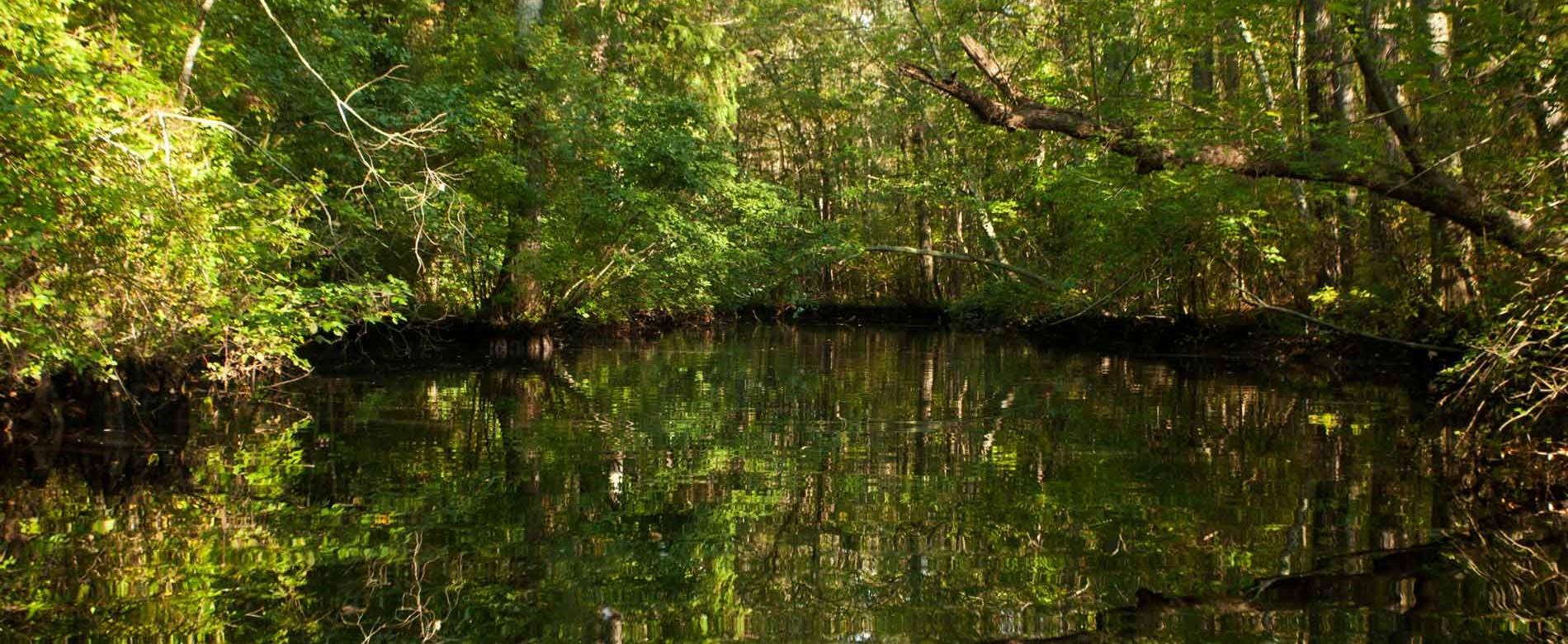 Pocomoke River State Forest