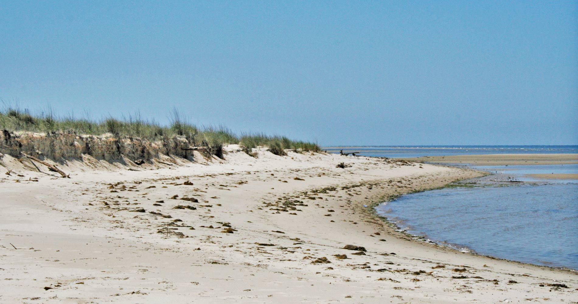 A beach on Savage Neck Dunes (Image courtesy: Virginia Department of Conservation and Recreation)