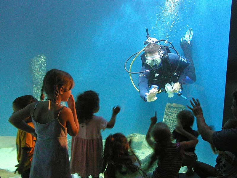 A diver at the Virginia Living Museum in Newport News, Virginia.